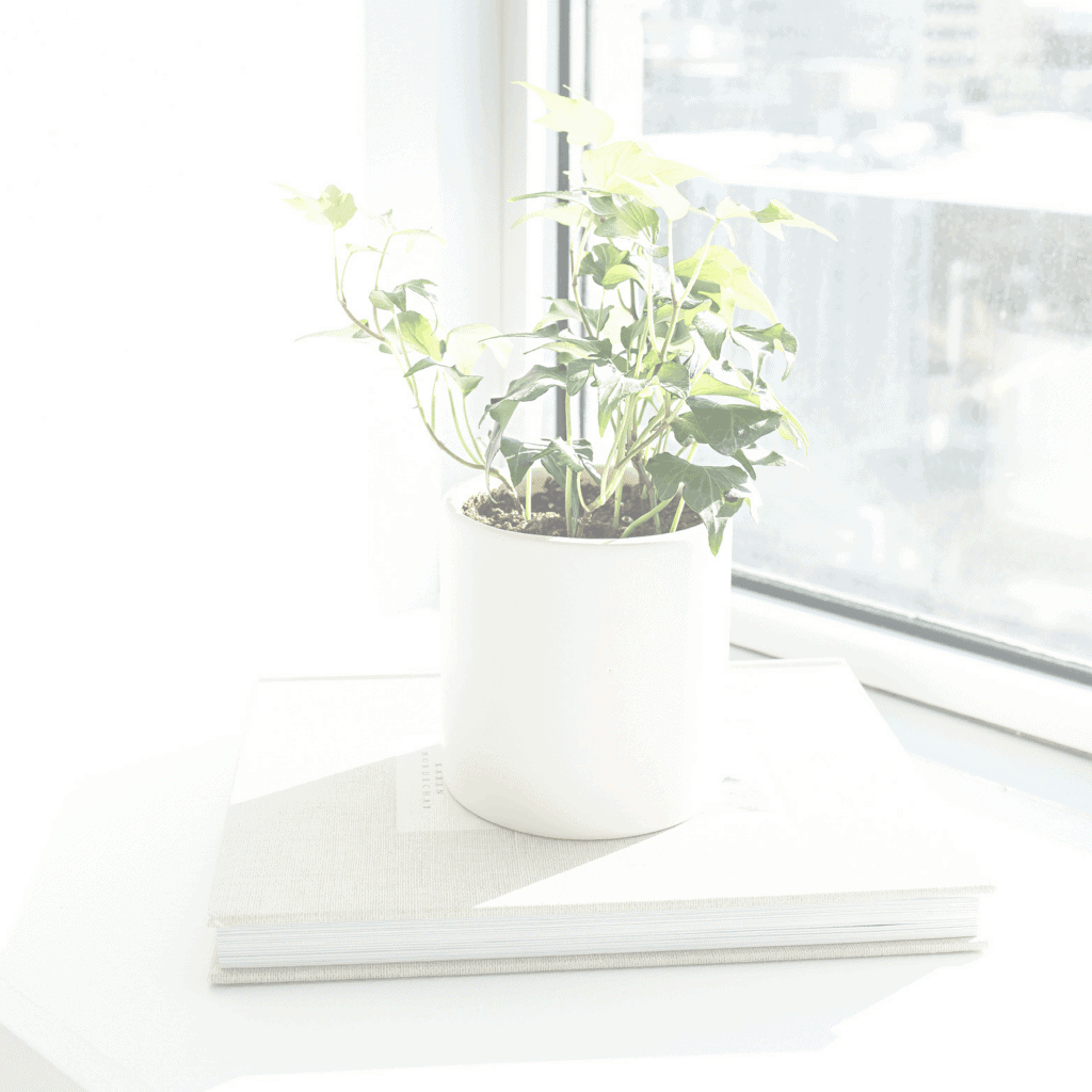 Plant in white pot, on white book, on window ledge