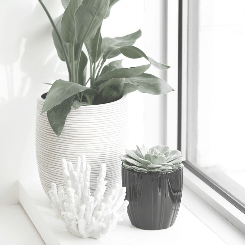 A plant in a white pot, succulent in a black pot, and a decorative coral on a window sill.